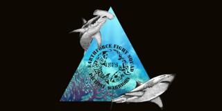 2015 12 08 - Soirée sur les requins - Le Delta
